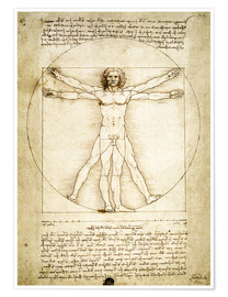 Premium poster  The Proportions of the human figure - Leonardo da Vinci