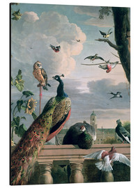 Aluminium print  Palace of Amsterdam with Exotic Birds - Melchior de Hondecoeter