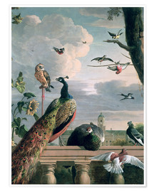 Premium poster  Palace of Amsterdam with Exotic Birds - Melchior de Hondecoeter