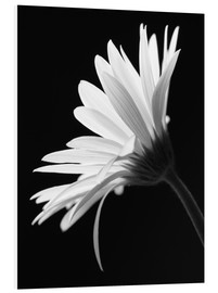 Foam board print  The flower - Falko Follert