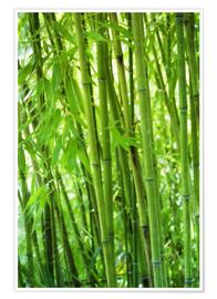 Premium poster Bamboo forest