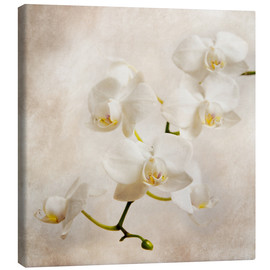 Canvas print  White orchid - Hannes Cmarits
