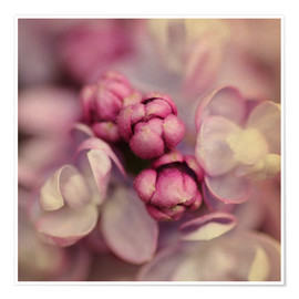 Premium poster  Lilac - Evelyn Meyer