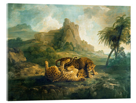 Acrylic print  Leopards at Play - George Stubbs