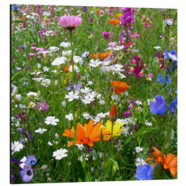 Aluminium print  Flowers meadow - blackpool