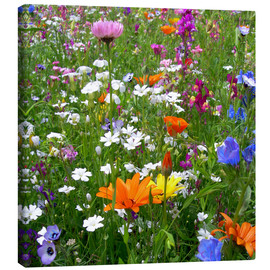 Canvas print  Flowers meadow - blackpool