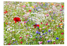 Foam board print  Colorful Meadow - Suzka