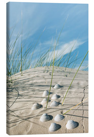 Canvas print  Dune with sea shells - Reiner Würz
