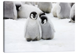 Canvas print  Sweet Emperor Penguin Chicks - Keren Su