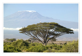 Premium poster  Big tree in front of the Kilimanjaro - Joe & Mary Ann McDonald