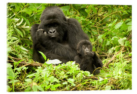 Acrylic print  Gorilla with baby in the green - Joe & Mary Ann McDonald