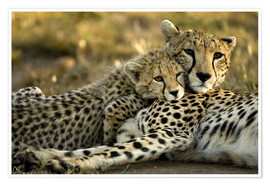 Premium poster  Cheetah cub with mother - Joe & Mary Ann McDonald