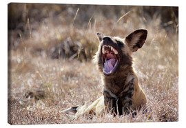Canvas print  Yawning wild dog - Wendy Kaveney