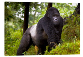 Acrylic print  Mountain gorilla on a foray - Ralph H. Bendjebar