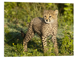 Foam board print  Little cheetah in the green - Ralph H. Bendjebar