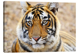 Canvas print  Expressive tiger portrait - Jagdeep Rajput