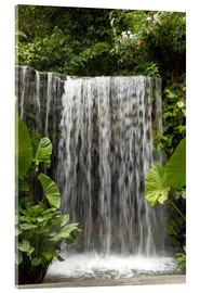 Acrylic print  Waterfall in the orchid garden - Cindy Miller Hopkins