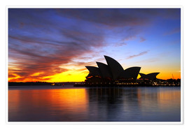 Premium poster  Sydney Opera House in the evening light - David Wall