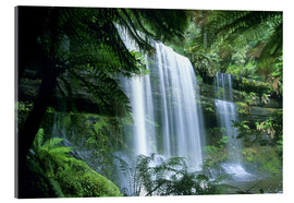 Acrylic print  Russell Falls and tree ferns - Kevin Schafer