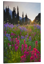 Aluminium print  Flower meadow at sunrise - Gary Luhm