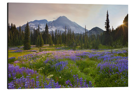 Aluminium print  Lupine meadow at sunrise - Gary Luhm