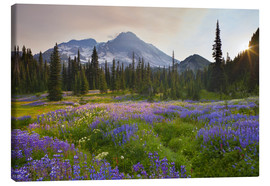 Canvas print  Lupine meadow at sunrise - Gary Luhm