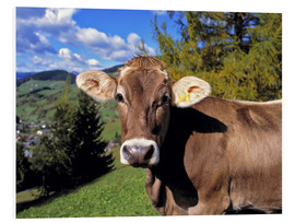 Foam board print  Cow in the Dolomites - Ric Ergenbright