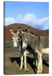 Canvas print  Two friendly donkeys - Kevin Schafer
