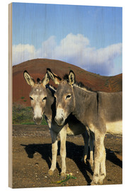 Wood print  Two friendly donkeys - Kevin Schafer