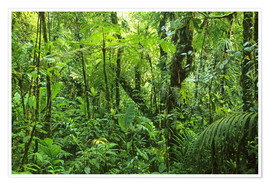 Premium poster  Look in the jungle - Kevin Schafer