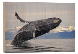 Wood print  Humpback whale in Frederick Sound - Paul Souders