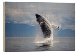 Wood print  Humpback whale in the jump - Paul Souders