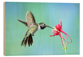Wood print  Hummingbird on columbine - Rolf Nussbaumer