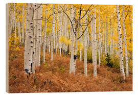 Wood print  Aspen forest and ferns in autumn - Don Grall