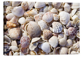 Canvas print  Shell collection - Rob Tilley