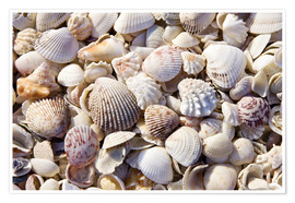 Premium poster  Shell collection - Rob Tilley