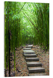 Acrylic print  Wooden path in the bamboo forest - Jim Goldstein