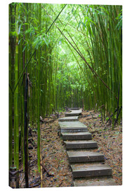 Canvas print  Wooden path in the bamboo forest - Jim Goldstein