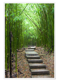 Premium poster  Wooden path in the bamboo forest - Jim Goldstein