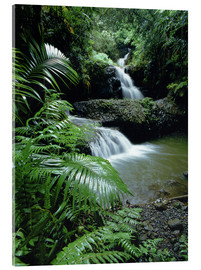 Acrylic print  Waterfall in Hawaii - Douglas Peebles