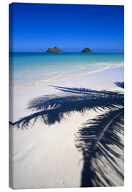Canvas print  Palm shadow on Lanikai Beach - Douglas Peebles