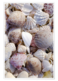 Premium poster  Shells on the beach - Rob Tilley
