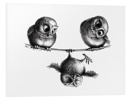 Foam board print  Three owls - Stefan Kahlhammer