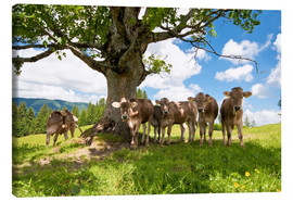 Canvas print  Young Cows - Jan Schuler