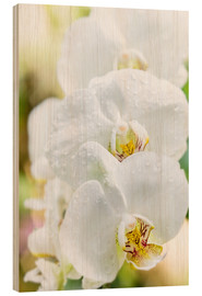 Wood print  White Orchid - Suzka