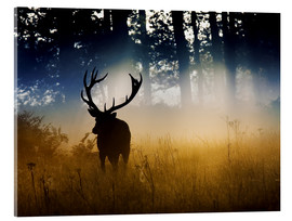 Acrylic print  Red deer in the subtle light - Alex Saberi