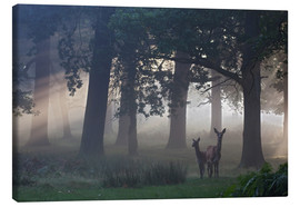 Canvas print  Two red deer in a clearing - Alex Saberi