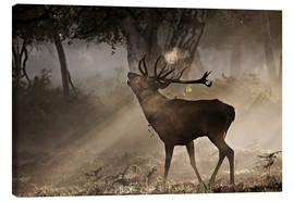 Canvas print  Deer in the forest - Alex Saberi