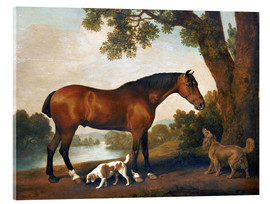 Acrylic print  Horse and Two Dogs - George Stubbs