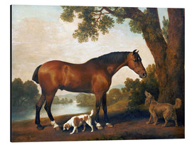 Aluminium print  Horse and two dogs - George Stubbs